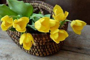 משלוח פרחים באשדוד ליולדת