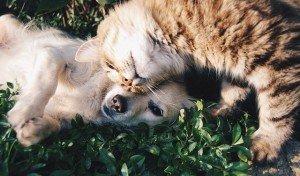 איזה טיפוס אתם – אנשי כלב או אנשי חתול