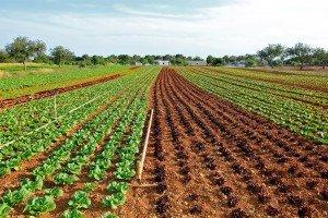 רשת החקלאי – פועלת למען צמצום פערי התיווך בין החקלאי לצרכן