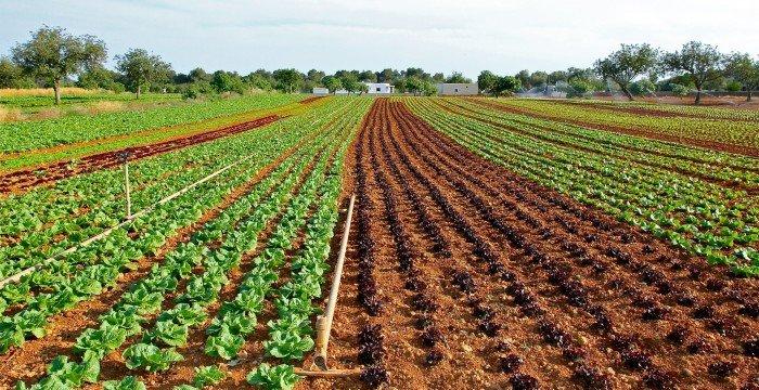 רשת החקלאי