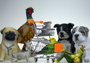 קטנה ומטריפה: חנות חיות בחיפה