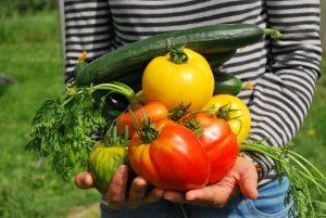 אילו ירקות יכולים לשתול בגינה אורגנית?
