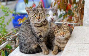 באילו מקרים ניתן לחתול אוכל רטוב