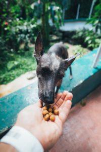 מה חשוב לבדוק באוכל של הכלב שלכם