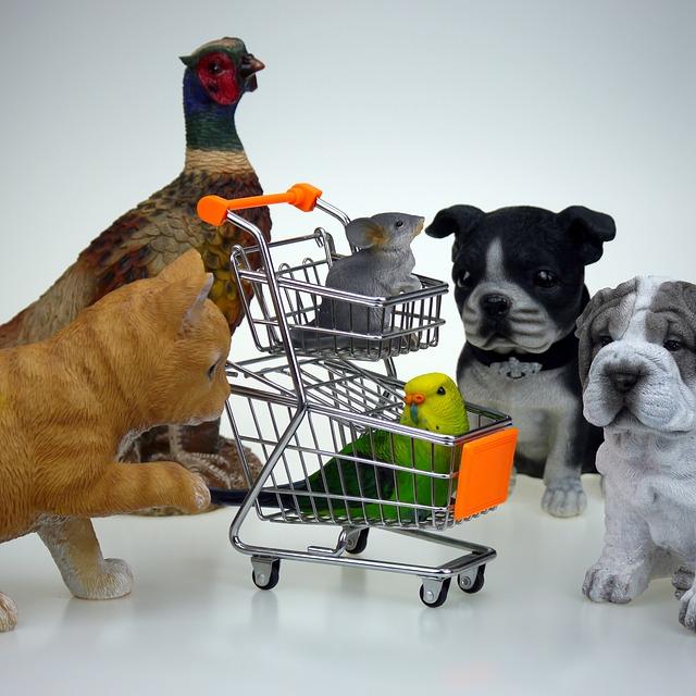 חנות חיות במודיעין