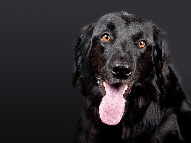 יונימל: אתר לאביזרי כלבים שאתם חייבים להכיר