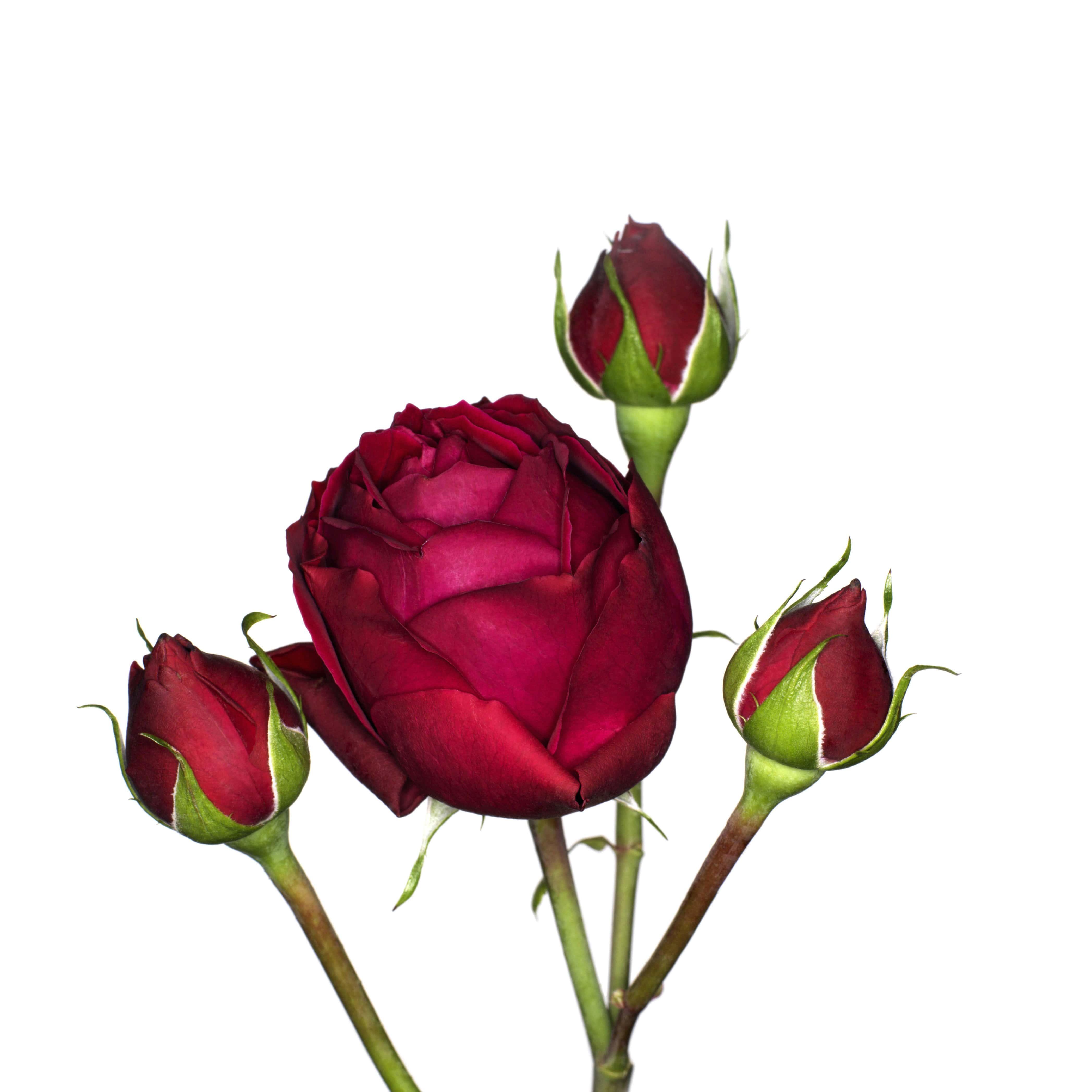 משלוח פרחים – איך זה עובד?